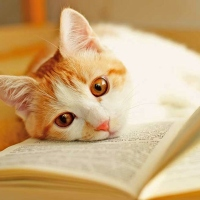 Four Cozy Mysteries For The Cat Lover In You
